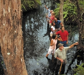 Guided swamp walk, Big Cypress National Preserve.  Photo by: Naples, Marco Island, Everglades CVB