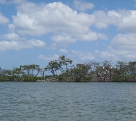 Enjoy sights and sounds of active bird rookery as you paddle past mangrove islands.