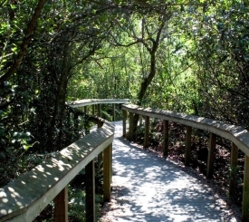 Take a walk on the many boardwalks in Everglades and Big Cypress Preserve