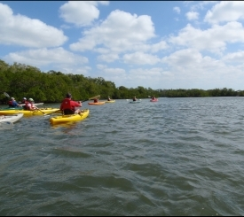 Kayaking Rookery Bay