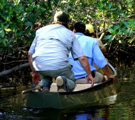 Exploring the mangrove jungle on a  pole boat eco tour