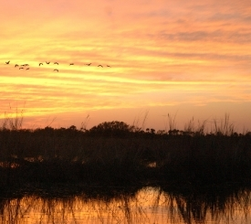 Enjoy the peace and beauty of an awesome Everglades sunset on one of our evening adventures... and perhaps see the glowing eyes of some local wildlife as you return to shore!