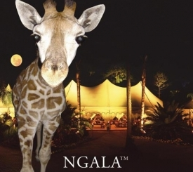 Coulter the Giraffe At NGALA