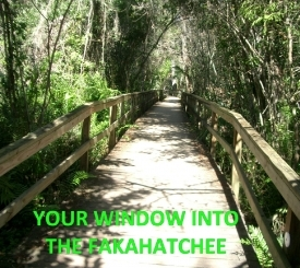Fakahatchee Boardwalk, your window into the Fakahatchee.