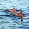 Premier Dolphin Cruises