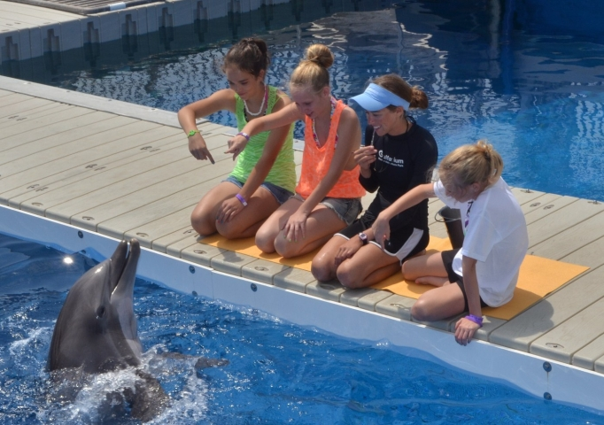 Discover Dolphins Encounter