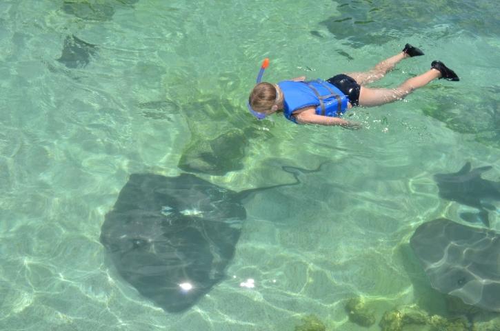 Stingray Bay Snorkel Encounter