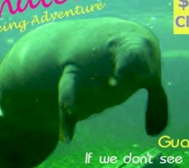 Manatee Sightseeing Adventure