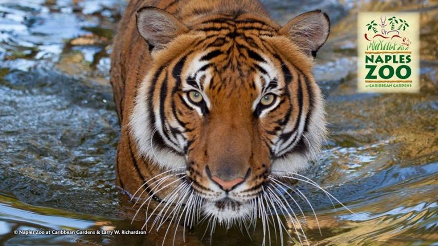 Safari Squad Kids Program at Naples Zoo