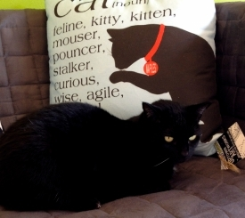 Enjoy some cuddles with your coffee at the Cat Cafe at Planet Tails