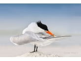 14th Annual Florida's Birding & Photo Fest