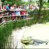 Live Alligator Feedings!