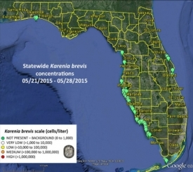 Red Tide Updates - Fish and Wildlife Research Institute