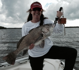 Black Drum ... Fun to catch