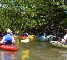 paddle marco kayak tour in the mangroves!