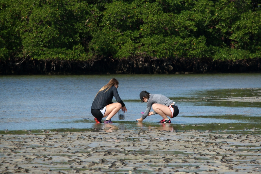 Science Saturday at Rookery Bay - Wonders of Water