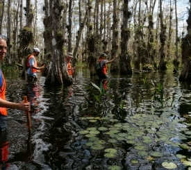 Ranger-led Activities in Big Cypress National Preserve