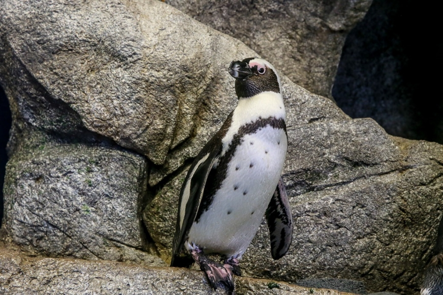 Feed a Penguin at Naples Zoo